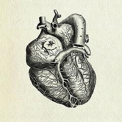 anatomy_breakthrough_action